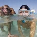 Хрюшки на Багамах