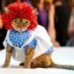 Кошачий показ мод в Нью-Йорке