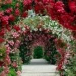 Цветы в дизайне ландшафта