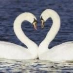 Влюбленность – это природно!