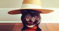 Моднявый собака Троттер и его гардероб
